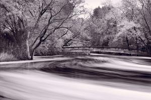 DuPage River Forest BW by Steve Gadomski