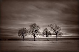 Four Trees by Steve Gadomski