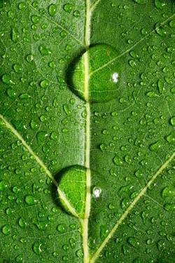 Leaf Dew Drop Number 10 by Steve Gadomski