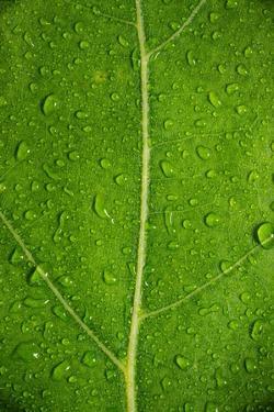 Leaf Dew Drop Number 6 by Steve Gadomski
