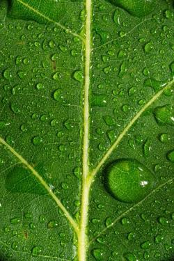 Leaf Dew Drop Number 8 by Steve Gadomski