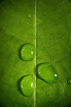 Leaf Dew Drop Number 9 by Steve Gadomski