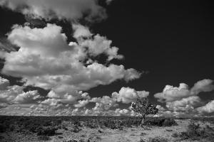 Lone Cedar Tree, New Mexico by Steve Gadomski