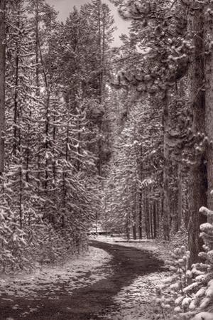 Mountain Trail Yellowstone BW by Steve Gadomski