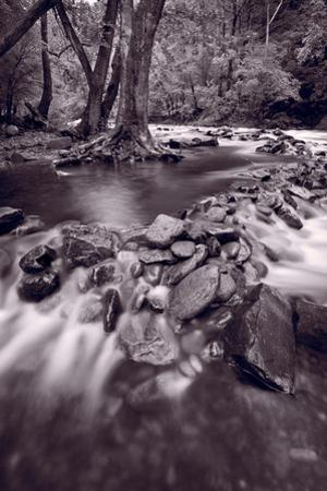 Pigeon Forge River Great Smoky Mountains BW by Steve Gadomski