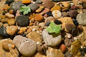 River Stones by Steve Gadomski