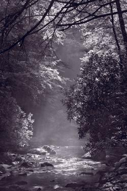 Stream Light BW by Steve Gadomski