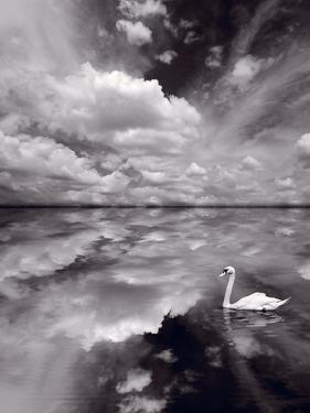 Swan Lake Explorations BW by Steve Gadomski