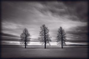 Three Trees by Steve Gadomski