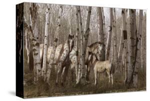 Birchwood Family by Steve Hunziker