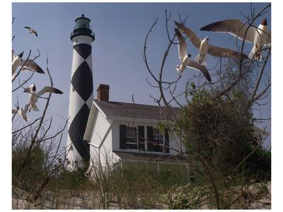 Cape Lookout I