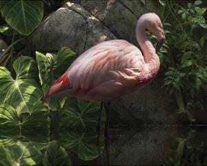 Dark Flamingo by Steve Hunziker