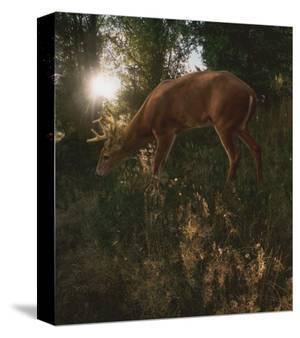 Deer Light by Steve Hunziker