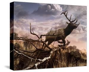 Elk Passage by Steve Hunziker