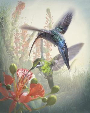 Hummingbird Cycle I by Steve Hunziker