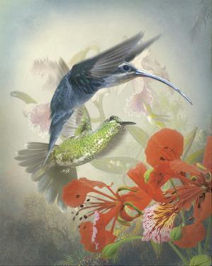 Hummingbird Cycle II by Steve Hunziker