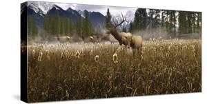 Misty Elk by Steve Hunziker