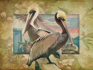 Pelican Paradise IV by Steve Hunziker