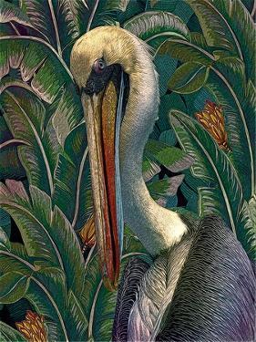 Primal Pelicana by Steve Hunziker