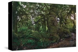 Rain Forest by Steve Hunziker