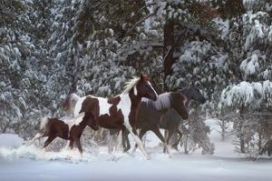 Snowy Runners by Steve Hunziker