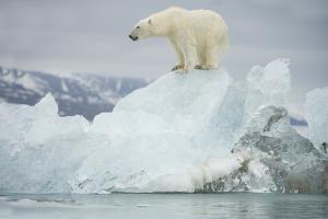Norway, Spitsbergen, Woodfjorden. Polar Bear Atop a Glacial Ice Floe by Steve Kazlowski