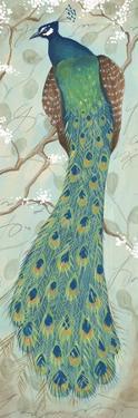 Peacock II by Steve Leal