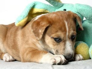Puppy Covered with Stuffed Animal Toy by Steve Starr