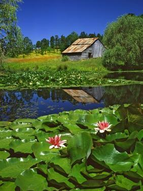 Barn and Waterlilies by Steve Terrill
