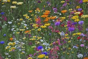 Colorful Wildflower Mixture by Steve Terrill
