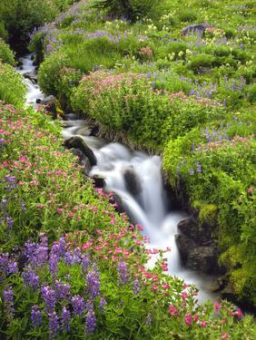 Elk Cove Creek Flowing Through Meadow of Wildflowers, Mt. Hood Wilderness, Oregon, USA by Steve Terrill