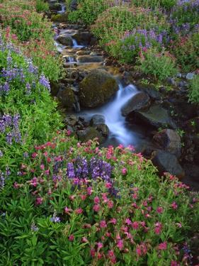 Elk Creek and Wildflowers by Steve Terrill