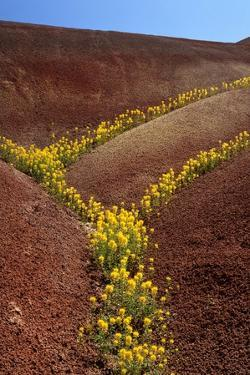 Painted Hills National Monument by Steve Terrill