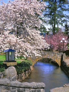 Spring Blossoms along Phelps Creek by Steve Terrill