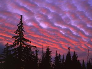 Sunset Painting Clouds Over Forest, Three Sisters Wilderness, Oregon, USA by Steve Terrill