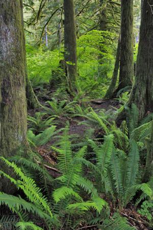 USA, Oregon. Forest Scenic
