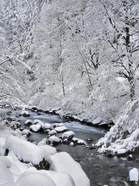 USA, Oregon, Mt. Hood National Forest. Snow on Boulder Creek by Steve Terrill