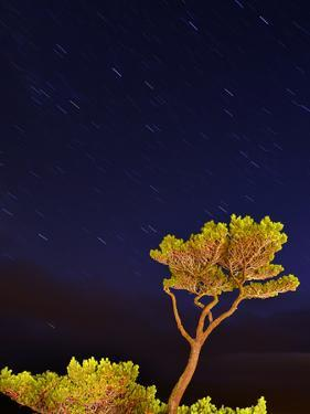 USA, Oregon, Oceanside. Pine Tree Against Star Trails by Steve Terrill
