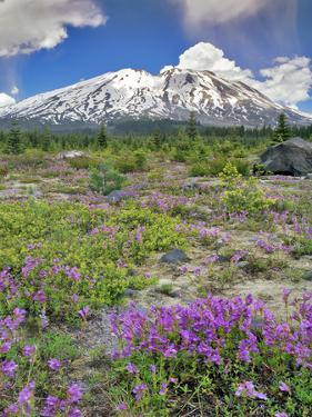 Washington State, Gifford Pinchot NF. Mount Saint Helens Landscape by Steve Terrill