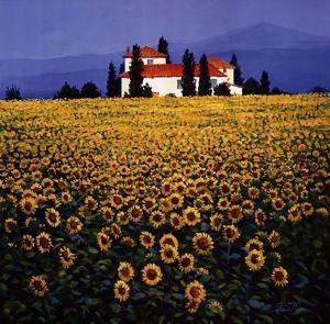 Sunflowers Field by Steve Thoms