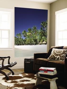 Boracay Beach, Palm Trees and Sand, Boracay Island, Philippines by Steve Vidler