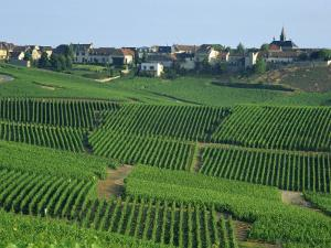 Marne, Champagne, Cramant Village and Vineyards, France by Steve Vidler