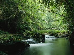 A Woodland Stream Winding Through a Burmese Jungle by Steve Winter