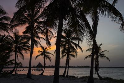 Palm trees at sunset. by Steve Winter