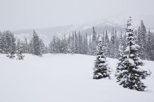 Snowfall in Wyoming's Gros Ventre Wilderness Area by Steve Winter