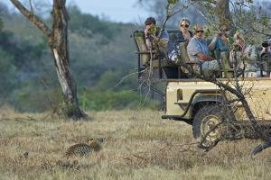 Tourists Encounter a Leopard in South Africa's Sabi Sand Game Reserve by Steve Winter