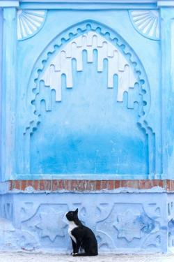 Black Cat and Blue Wall by Steven Boone