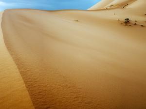 Sand Dunes in the Desert by Steven Boone
