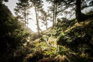 Along the Washington Coast by Steven Gnam