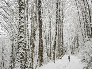 Alyson Dimmitt Gnam Trail Running in the Cascades.  Winter in Washington. by Steven Gnam